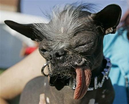 Elwood - världens fulastehund